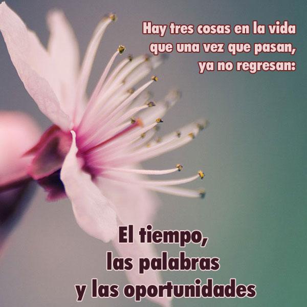 Frases Bonitas De Flores Tumblr Klewer U